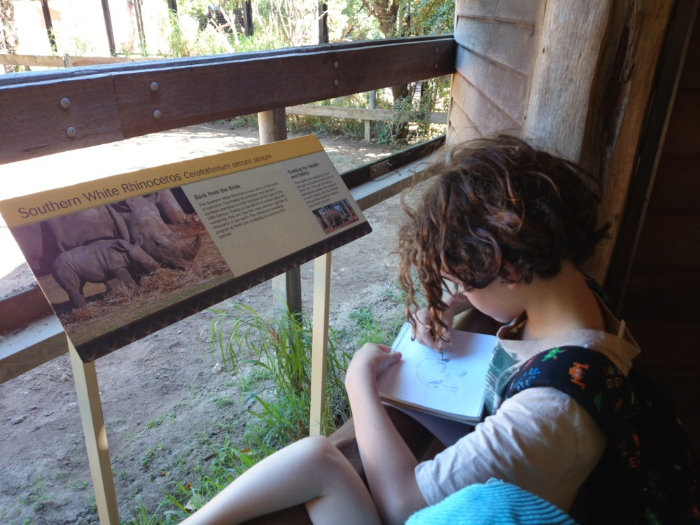 10yo writing notes and drawing a diagram of Southern White Rhino at Perth Zoo, Western Australia