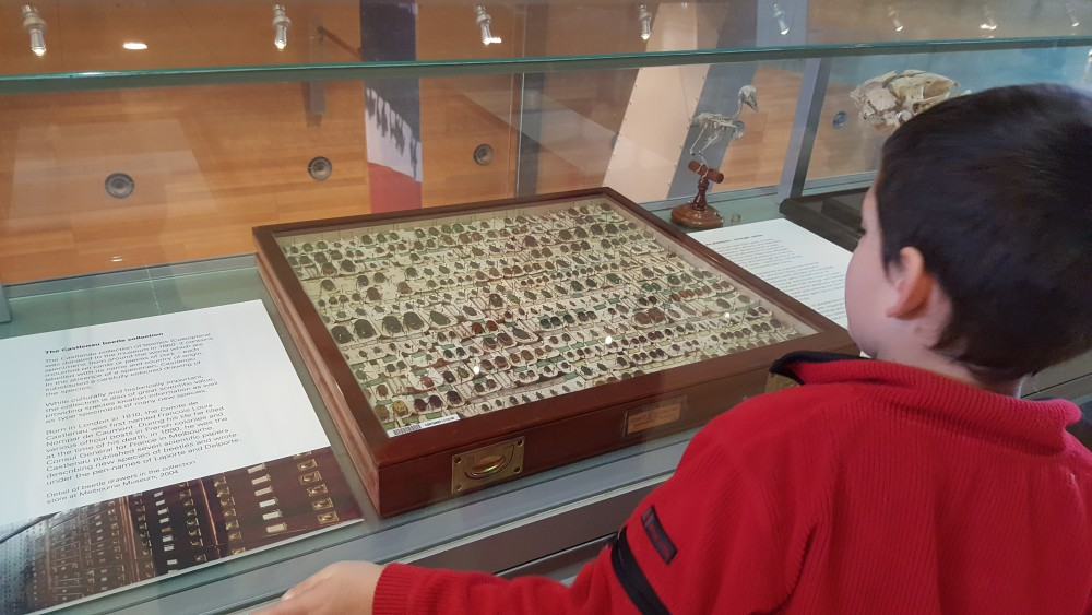7yo studying beetles at Melbourne Museum, Victoria, Australia