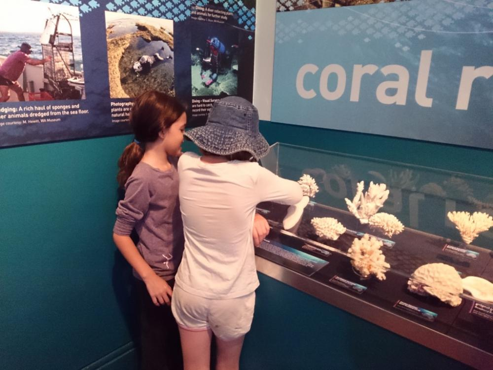 Kids studying coral at Western Australian Museum