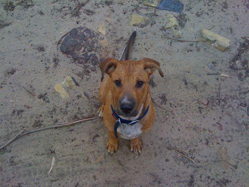 Good Dog Walks Between Dereham And Hingham