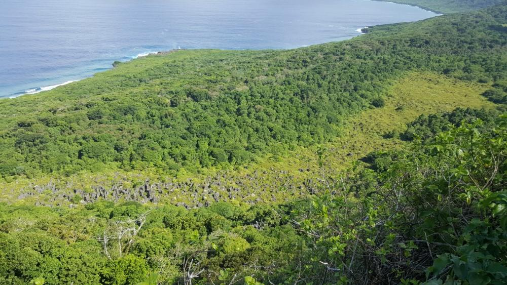 Pinnacles below Margaret's Knoll being grown over by jungle, Christmas Island