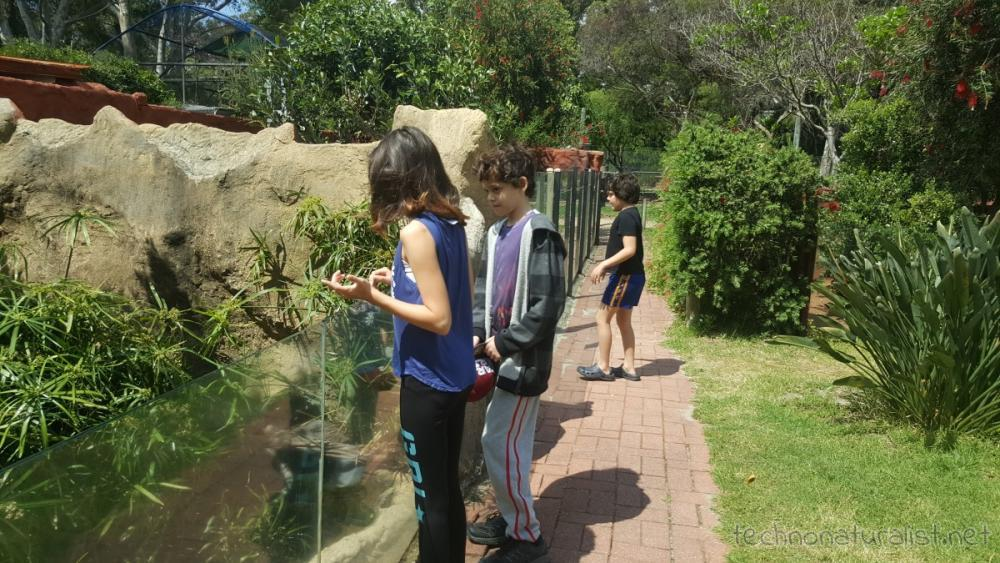 13yo-11yo-9yo-armadale-reptile-centre-outside
