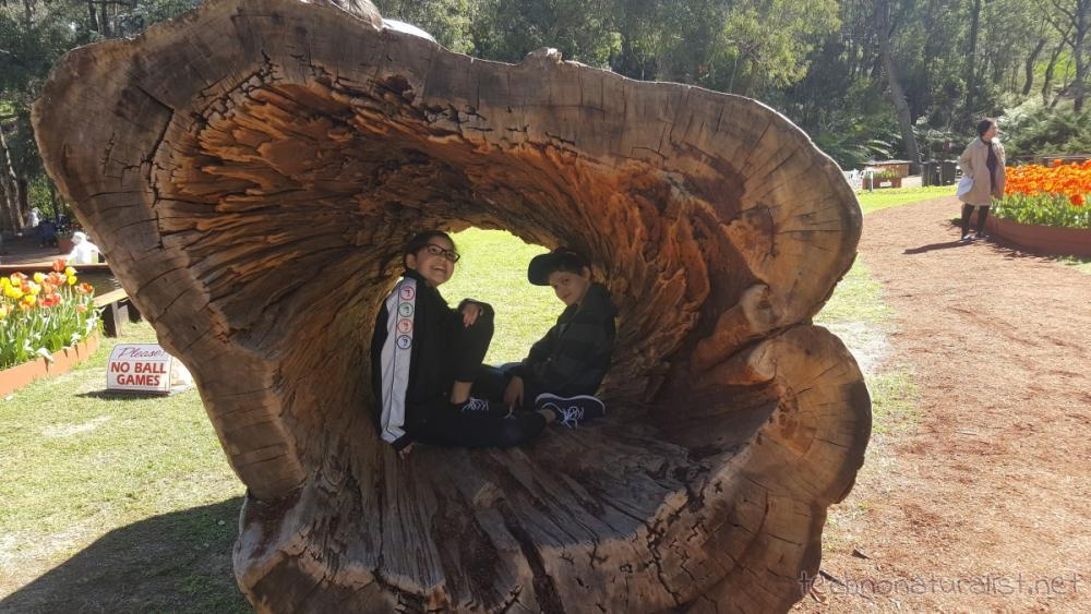 13yo-11yo-inside-log-araluen