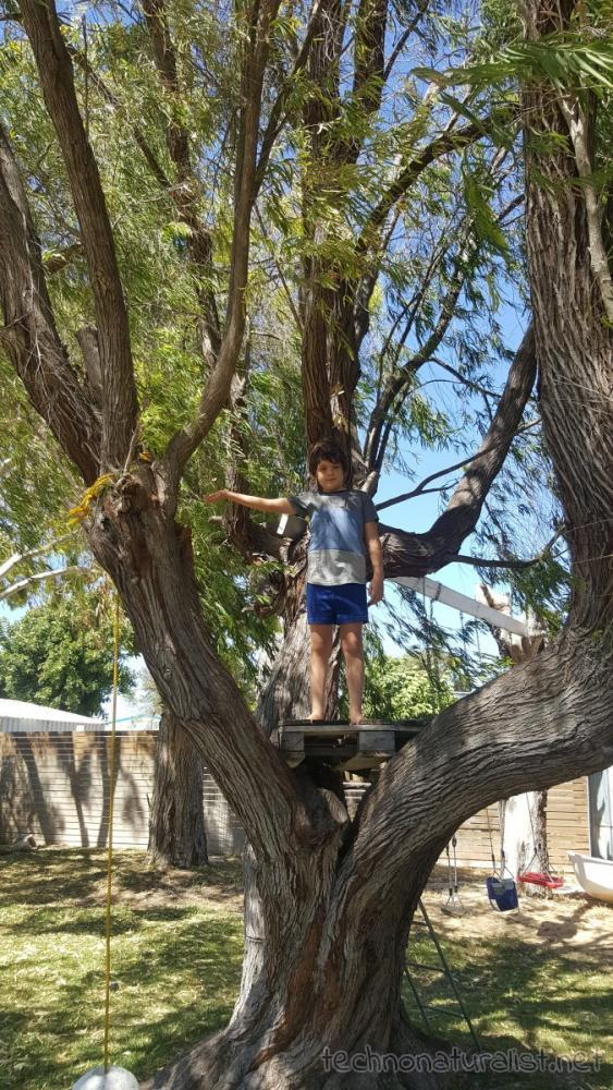 8yo-on-tree-fort-jurien-beach-house
