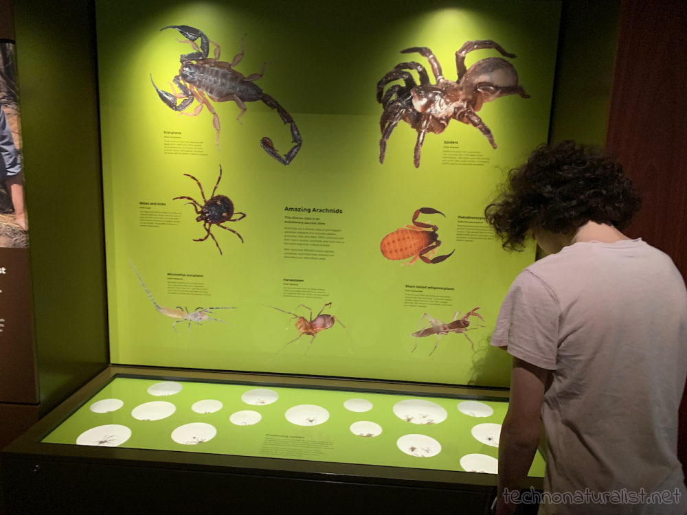 creepy crawlies section in Boola Bardip Museum, Perth, Western Australia
