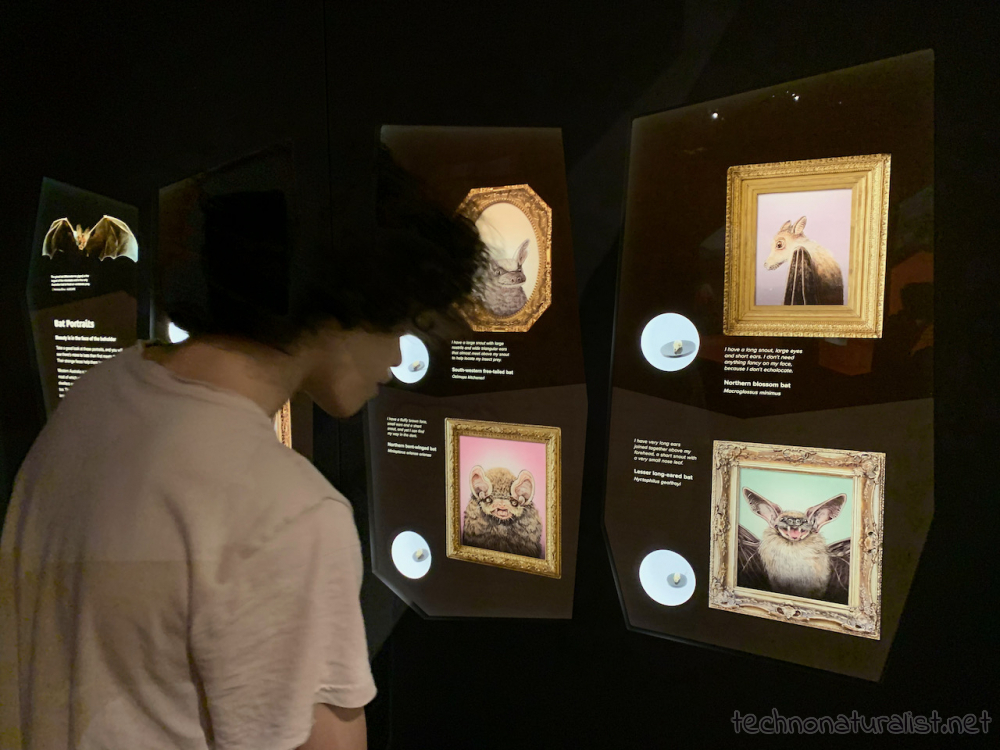16yo looking at bat skull display, Boola Bardip Museum, Perth, Western Australia