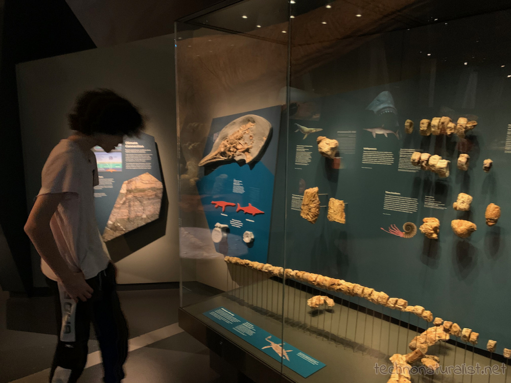 16yo looking at vertebrae display, Boola Bardip Museum, Perth, Western Australia