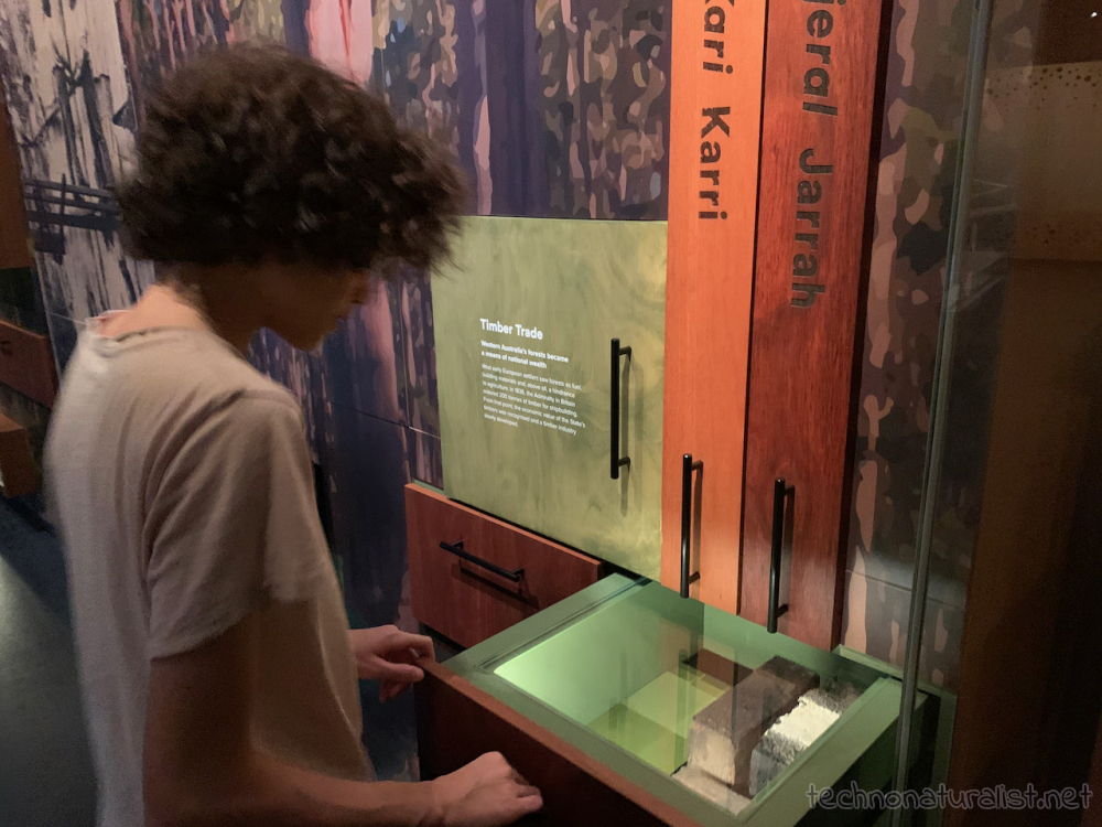 16yo looking at different types of wood in a drawer at Boola Bardip Museum, Perth, Western Australia