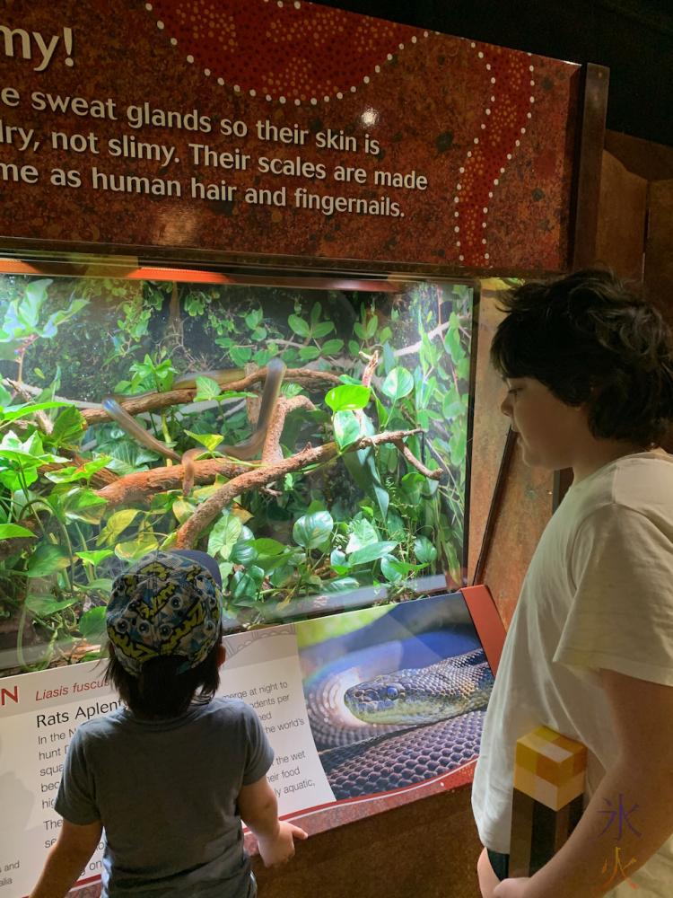 12yo and 4yo looking at snake at Perth Zoo, Western Australia
