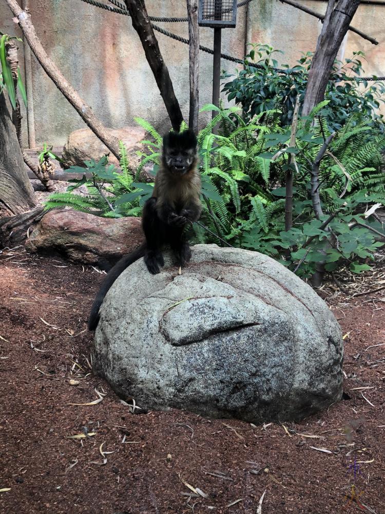 monkey at Perth Zoo, Western Australia, taken by 14yo