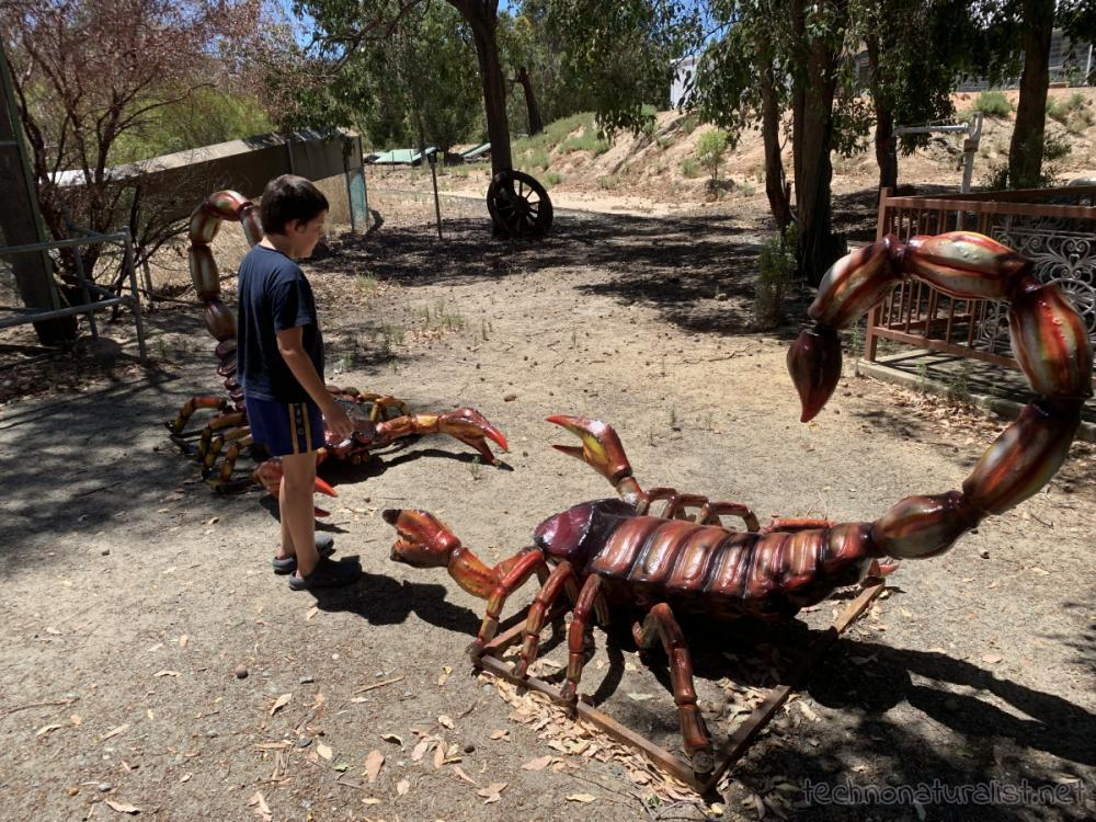10yo telling two giant model scorpions to break it up, Cohunu Koala Park, Western Australia