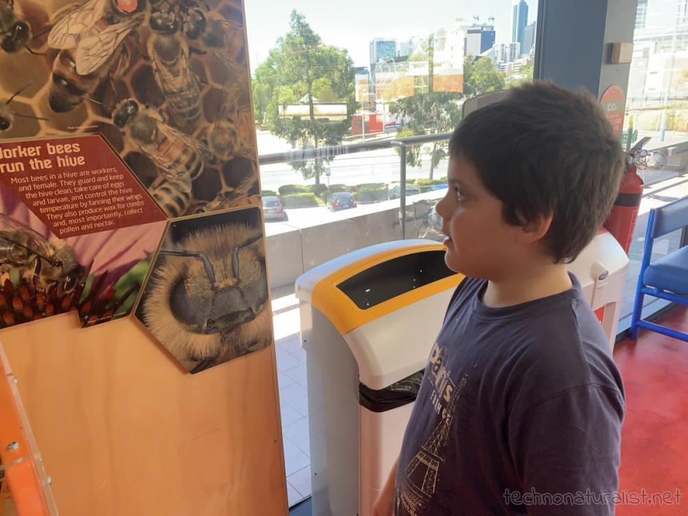 10yo looking at bees, Scitech, Perth, Western Australia
