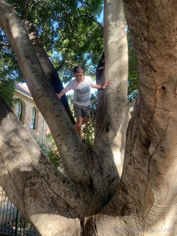 10yo in tree, Perth, Western Australia