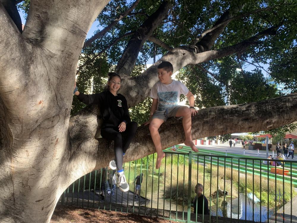 12yo and 10yo in tree, Perth, Western Australia