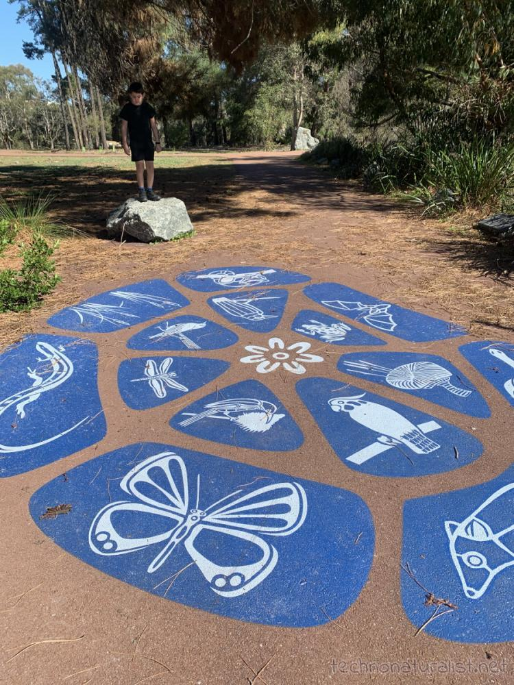 painting on the ground at PIney Lakes Reserve, Bateman, Western Australia
