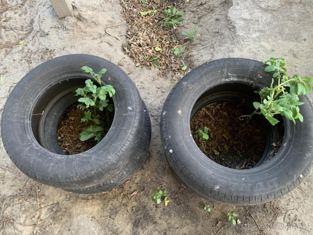 10yo's tyre potatoes