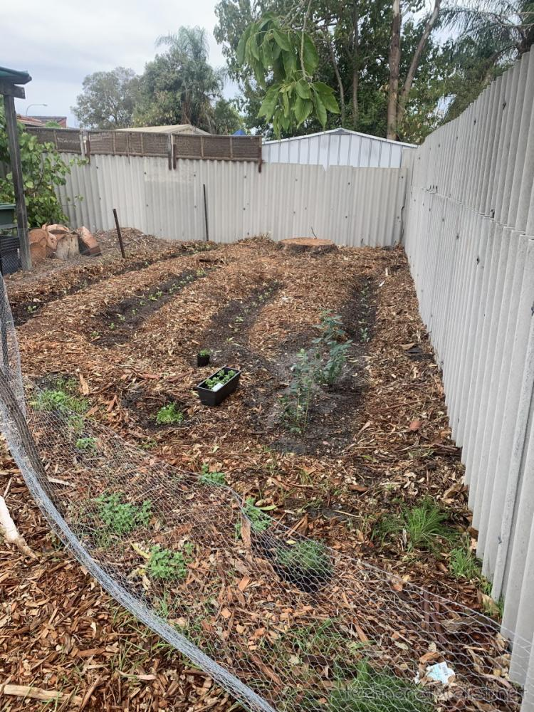 newly planted vege patch