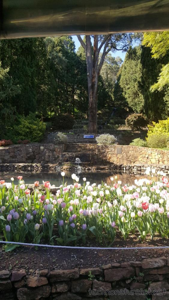 araluen-grove-of-unforgotten