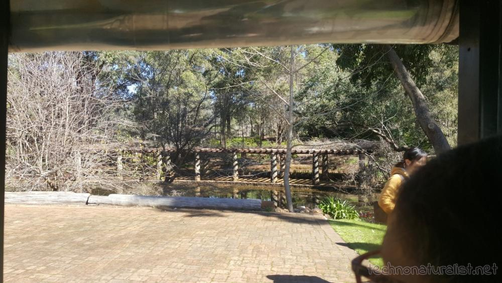 araluen-swimming-pool-lagoon