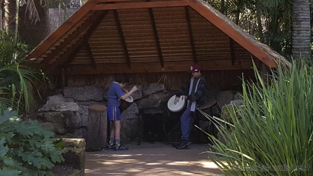 boys-drumming-perth-zoo