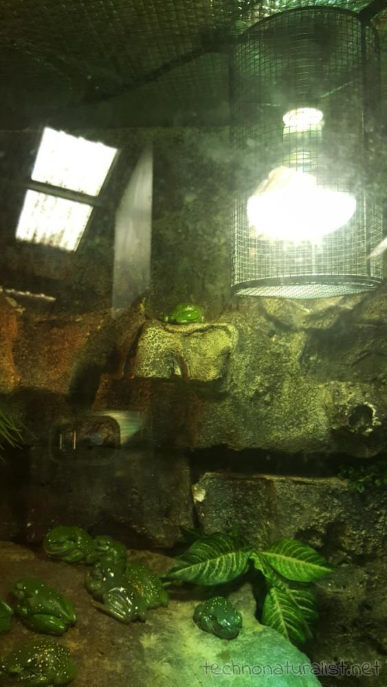 frogs-armadale-wildlife-centre