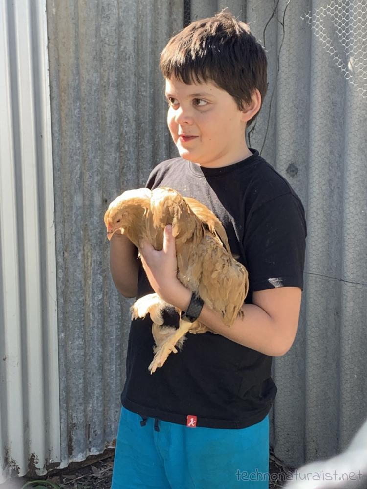 10yo with one of the chickens he named