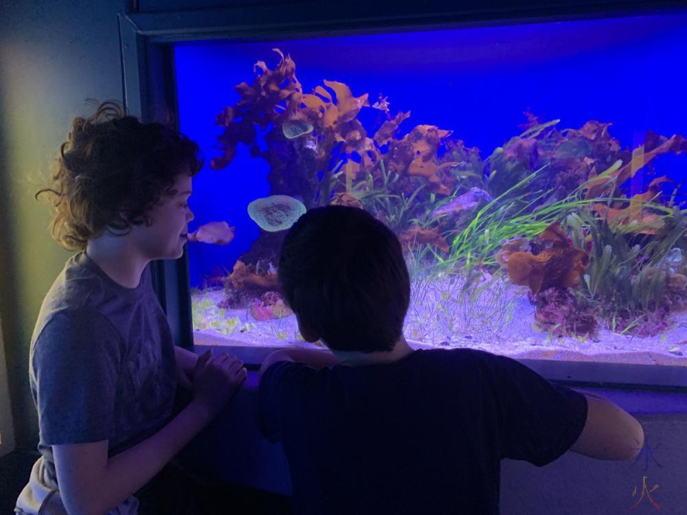 14yo and 10yo looking at cuttlefish at AQWA, Western Australia