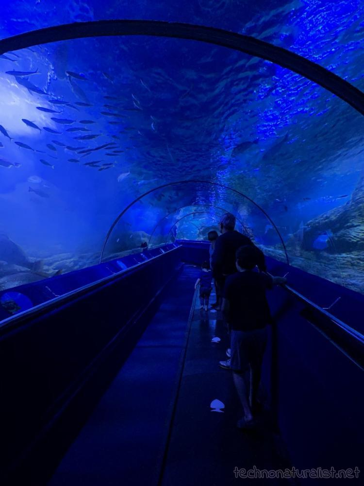 going through the underwater tunnel at AQWA, Western Australia