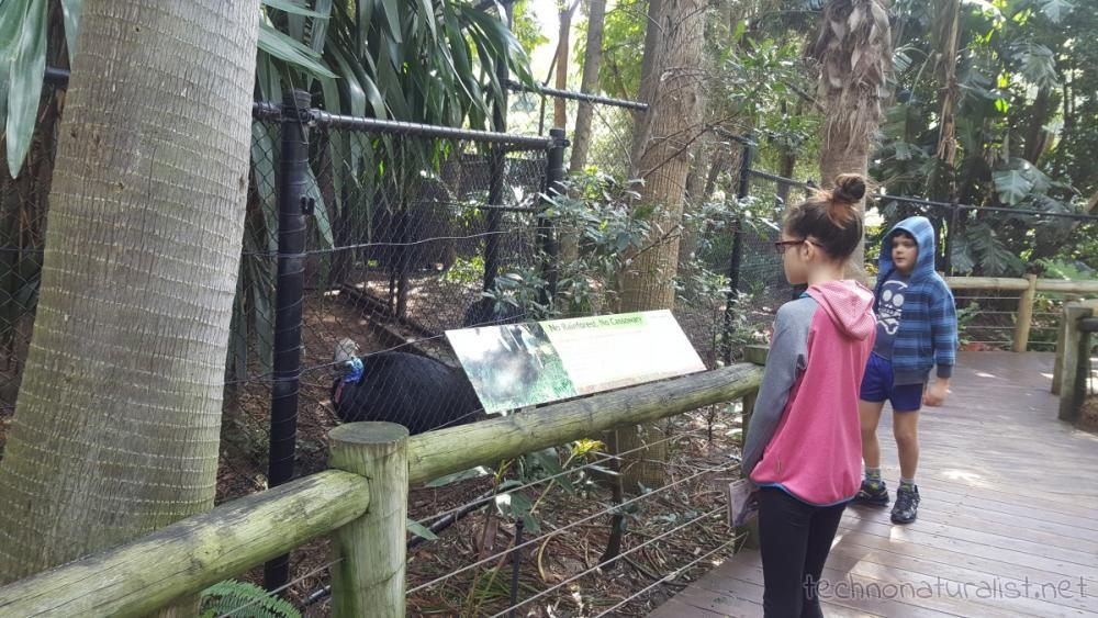 kids-checking-out-cassowary-perth-zoo