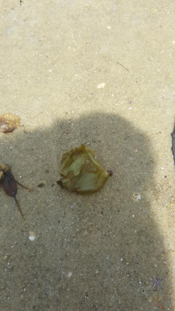seaweed-pt-walter