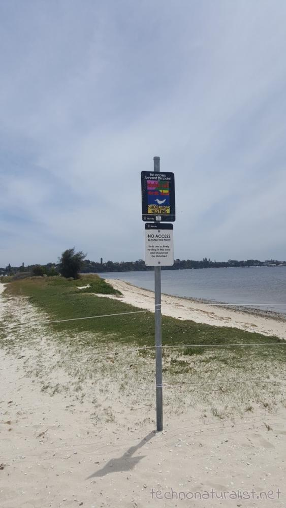 shorebirds-nesting-sign-pt-walter