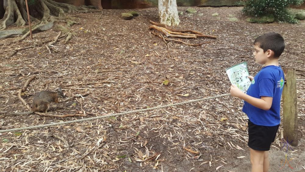 wallabies-near-path-australian-bushwalk-perth-zoo